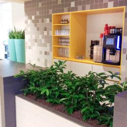 Kantoorplanten in Amsterdam van Hoogendoorn Projectbeplanting