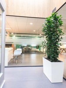Atrium met planten
