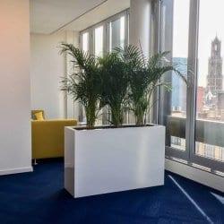 Kantoorplanten in Utrecht