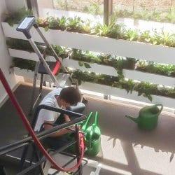 Onderhoud van interieurbeplanting