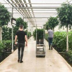 Plantenkas Hoogendoorn Projectbeplanting